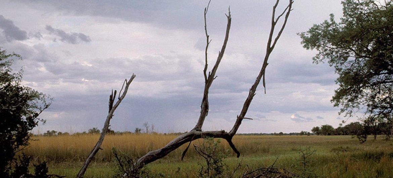 Vue sur des plaines au Botswana