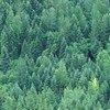 Vue aérienne d'une forêt au Canada (archives). Photo Banque mondiale/Curt Carnemark
