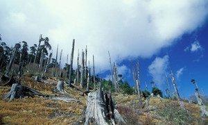 Deforestation in Bhutan (file). World Bank/Curt Carnemark