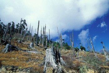 Deforestación en Buthán.