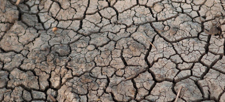 Bol, la capital de la región de Lac, en Chad, sufre un grave problema de sequía. Foto UNICEF/Patricia Esteve.