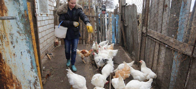 Местное фермерское хозяйство на Донбассе Фото  ФАО/Алексей Филиппов