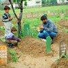 Отец у могилы сына, погибшего в Сребренице Фото ООН Джон/Айзек