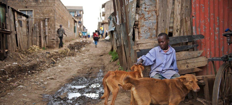 Environ 80% des personnes exposées à la rage vivent dans des zones rurales pauvres d'Afrique et d'Asie sans accès au traitement rapide si elles sont mordues.