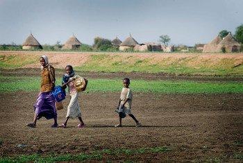 أطفال يمرون في أرض زراعية في طريقهم لجلب المياه - ولاية القضارف- السودان