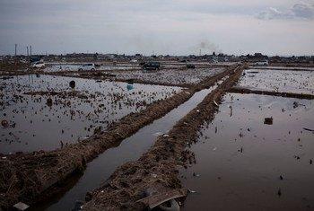 أرشيف: الرابع من مارس 2011،  آثار الأضرار الناتجة  عن التسونامي، مدينة سينداي، في ولاية مياجي باليابان.