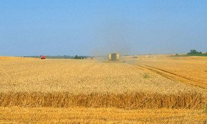 Wheat supplies are expected to grow. Here, a combine harvester at work in France.