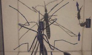O mosquito aedes aegypti transmite doenças como chikungunya, dengue e zika.