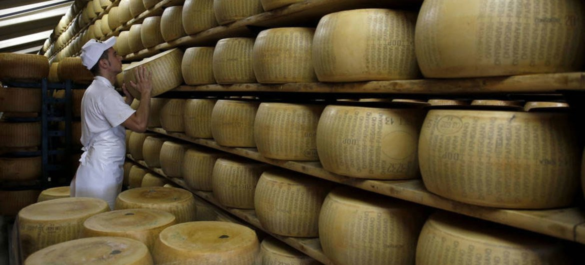 A worker at a factory in Italy inspects stacks of Parmesan cheese wheels.
