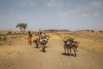 Засуха в  результате Эль-Ниньо  в Эфиопии.  Фото ЮНИСЕФ