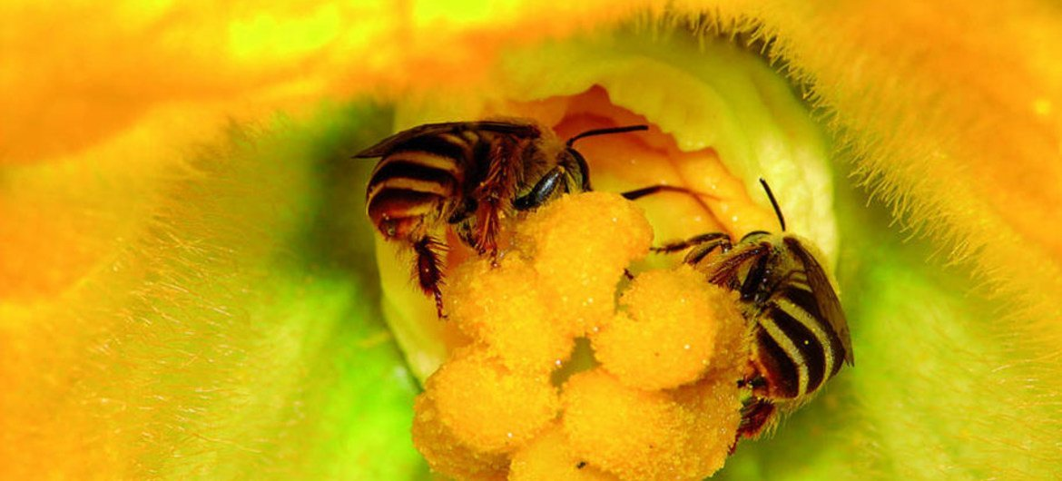 A new study suggest that poorly performing farms could significantly increase their crop yields by attracting more pollinators to their land.
