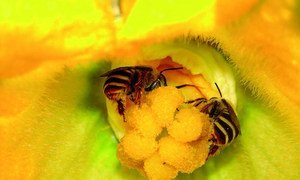 Les abeilles procurent des bienfaits aux êtres humains, aux plantes et à l'environnement.