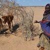 Sequía en Etiopía exacerbada por el fenómeno de El Niño. Foto: PMA/Melese Awoke.