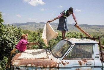 Des habitants du village de Manyandzeni, au Swaziland, font sécher du maïs sur leur véhicule. Photo FAO/Giuilio Napolitano