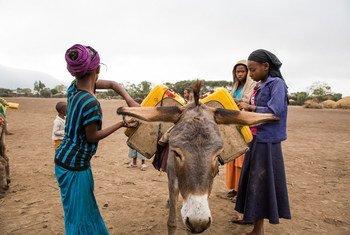 埃塞俄比亚女童为家庭挑水