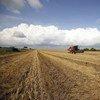 Tractor en una granja. Foto: FAO/Alessia Pierdomenico