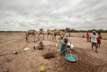 In Somaliland and Puntland, close to two million people are affected by the drought amid the El Niño phenomenon. (File)