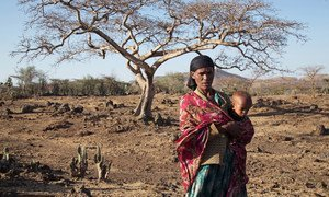 The El Niño-induced drought in Ziway Dugda, Oromia region of Ethiopia, is affecting every family and they don't have enough food at home to feed themselves.