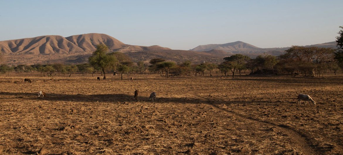Drought associated with the El Niño phenomenon has severely affected Arsi, Ethiopia.