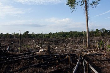 Burnt and degraded forest within Tesso Nilo National Park, Riau Province, Sumatra, Indonesia.