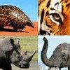 """La campaña """"Feroz por la Vida"""" busca poner fin al tráfico ilícito de vida silvestre. Foto: UNODC"""