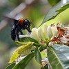 Культура пчеловодства на деревьях в Польше и Беларуси – в перечне номинантов на включение в список нематериального наследия ЮНЕСКО