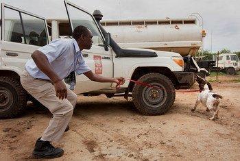 Le Service de la lutte antimines de l'ONU (UNMAS) procède à une démontration du travail des chiens détecteurs d'explosifs à Juba, au Soudan du Sud. Photo MINUSS/JC McIlwaine