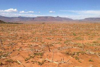El Niño ha aumentado las sequías en varias regiones del mundo y con ello la inseguridad alimentaria. Foto: FAO