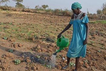 Mwanamke akiendesha kilimo Akobo Sudan Kusini kufuatia FAO kutoa mbegu za mboga mboga kwa wakazi.