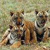 Protéger la vie sauvage. Photo ONU/John Isaac