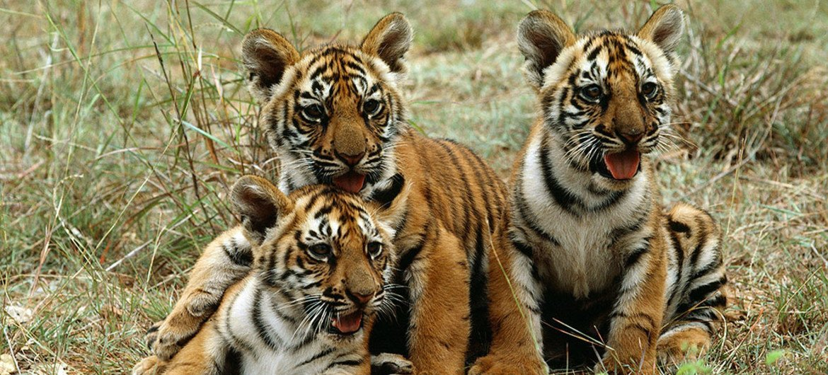 Protecting our Wildlife - A Race against Time.