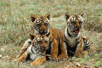 Protéger la vie sauvage.