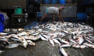A fisheries worker unloading the morning's catch.