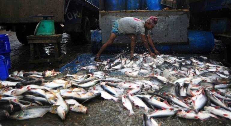 Un trabajador de una lonja de pescado descarga las capturas del día.