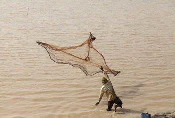 A fisherman throws his net in Arikouka basin in Tera, Niger.