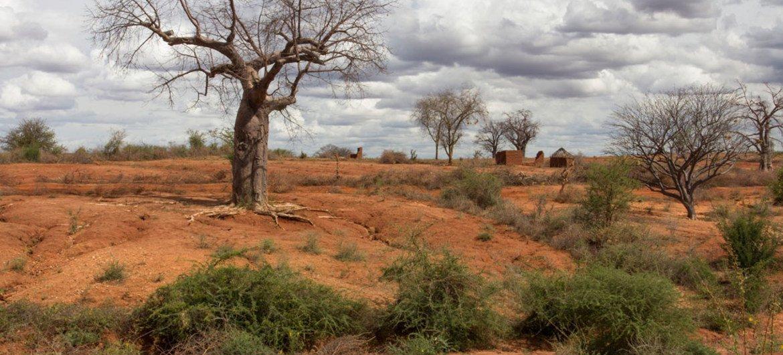 В последующие 25 лет деградация земель может привести к сокращению мирового производства продовольствия не менее чем на 12 процентов
