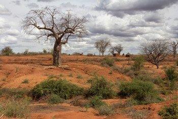 Un baobab dans un paysage aride dégradé d'une province à l'est du Kenya. Photo : Banque mondiale / Flore de Preneuf