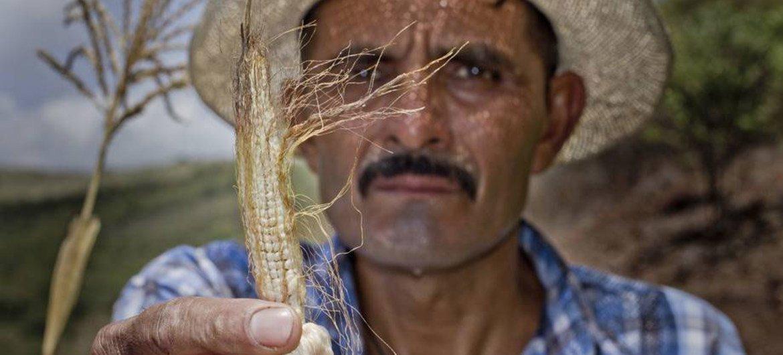 Los agricultores del Corredor Seco de Centroamérica han sufrido efectos devastadores. Foto: PMA/Francisco Fion