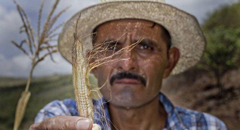 Los agricultores del Corredor Seco de Centroamérica sufren los efectos devastadores de El Niño. Foto: PMA/Francisco Fion