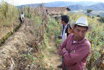 Governos da América Central estimam que 2,2 milhões de pessoas de El Salvador, da Guatemala, de Honduras e da Nicarágua tenham sofrido perdas das lavouras.