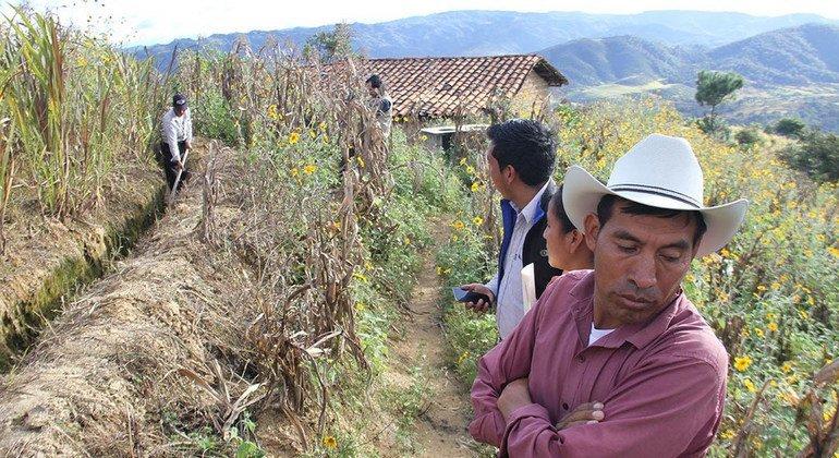 Al menos 2 millones de personas han estado en situación de inseguridad alimentaria en el Corredor Seco de Centroamérica debido a sequías consecutivas en los pasados 4 años. Foto: FAO