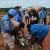 驻南苏丹特派团图片