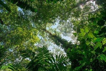 Une forêt. Photo Programme ONU-REDD