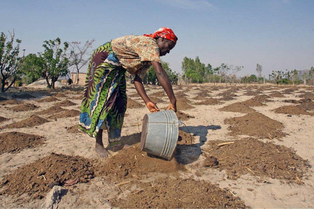 L'échec généralisé des récoltes a exacerbé la malnutrition chronique dans la région de l'Afrique australe. Photo: FAO / Desmond Kwande