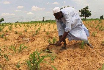 Kukarata, nord-est du Nigéria : un agriculteur déplacé prépare son champ avant de planter.