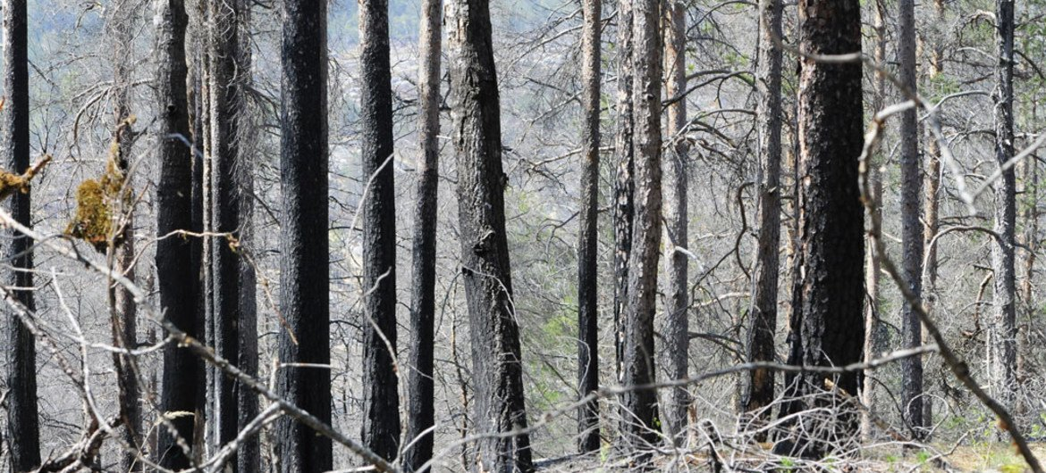 Evidence of a forest fire in Mykland, Norway.