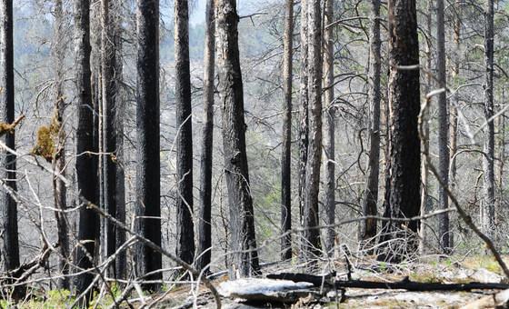 Floresta queimada em Mykland, Noruega