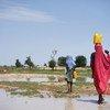 Des filles transportent de l'eau à travers un champ après la pluie sur un site pour personnes déplacés à Diffa, au Niger, le 18 août 2016.