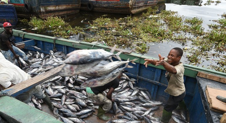 New UN agriculture agency report underscores value of fishing in fight against global hunger