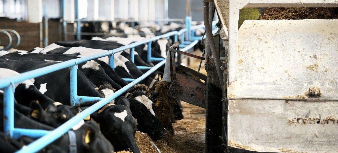 De bonnes pratiques hygiéniques et de santé animale dans les fermes peuvent réduire de manière importante l'utilisation de médicaments antimicrobiens.